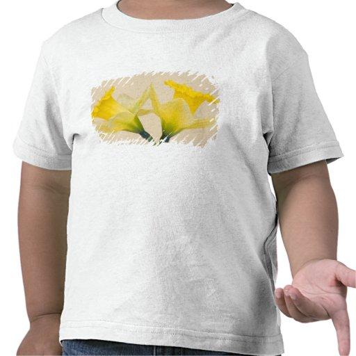 Narcisos amarillos camiseta