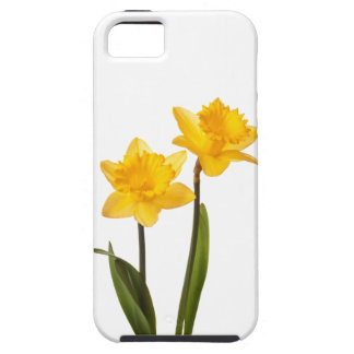 Narcisos amarillos de la primavera en blanco iPhone 5 Case-Mate fundas