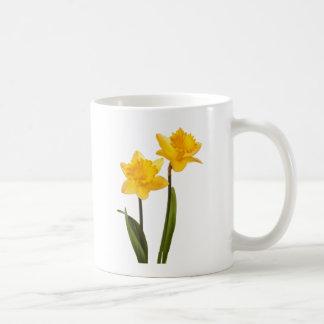 Narcisos amarillos de la primavera en blanco taza