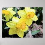 Narcisos amarillos de la primavera impresiones