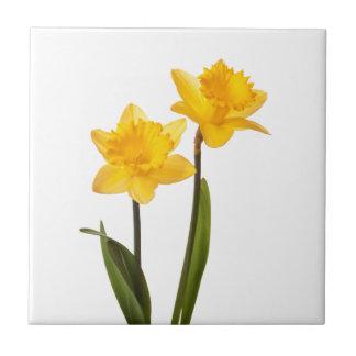 Narcisos amarillos en el blanco - espacio en blanc teja cerámica