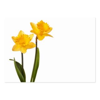 Narcisos amarillos en el blanco - espacio en tarjetas de visita grandes