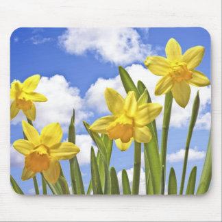 Narcisos amarillos en primavera en los Países Bajo Alfombrillas De Ratones
