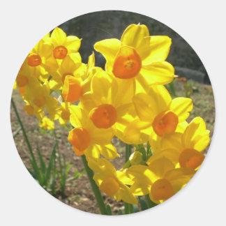 Narcisos amarillos pegatina redonda