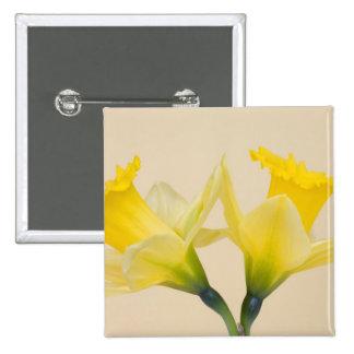 Narcisos amarillos pin cuadrado