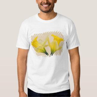Narcisos amarillos playera