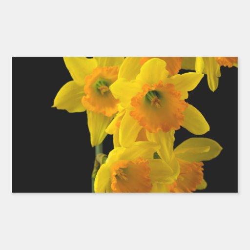 Narcisos amarillos y anaranjados deliciosos pegatina rectangular
