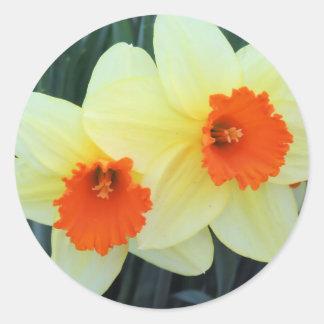 Narcisos amarillos y anaranjados pegatina redonda