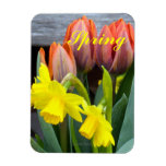Narcisos anaranjados de los tulipanes iman rectangular