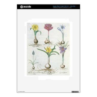 Narcisos, azafranes y jacinto: autum 1.Narcissus Pegatina Skin Para iPad 3