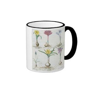 Narcisos, azafranes y jacinto: autum 1.Narcissus Taza