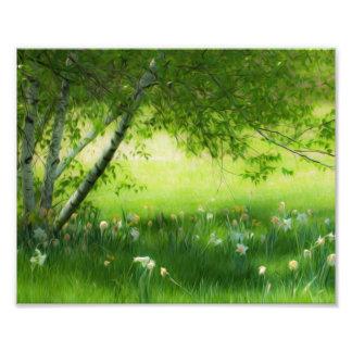 Narcisos de la primavera impresión fotográfica