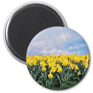 Narcisos de la primavera, Shrewsbury, Shropshire,  Imán Redondo 5 Cm