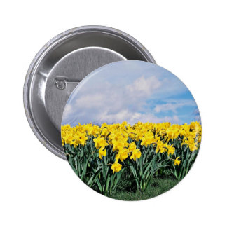Narcisos de la primavera, Shrewsbury, Shropshire,  Pin Redondo 5 Cm