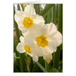 Narcisos de la primavera tarjetón