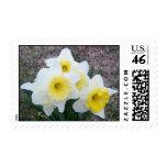 Narcisos de marzo sellos