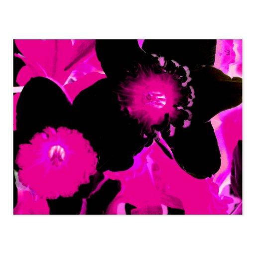 Narcisos de neón rosados y negros postal