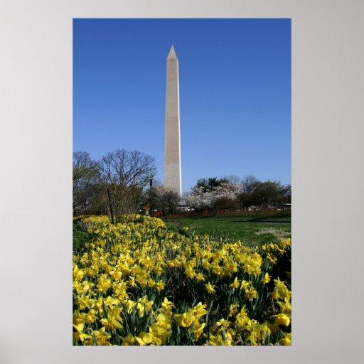 Narcisos del monumento de Washington Poster