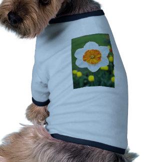 Narcisos Grande-ahuecados amarillos, 'profesor Ein Camisas De Perritos