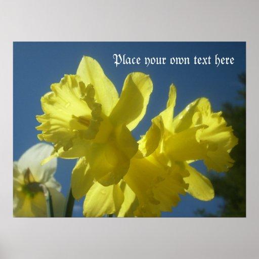 Narcisos hermosos de la primavera póster
