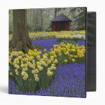Narcisos, jacinto de uva, y jardín del tulipán,