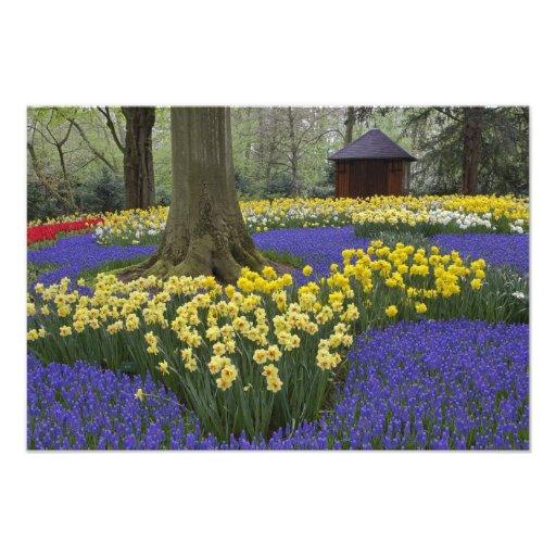 Narcisos, jacinto de uva, y jardín del tulipán, arte con fotos