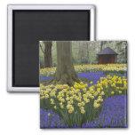 Narcisos, jacinto de uva, y jardín del tulipán, imanes de nevera