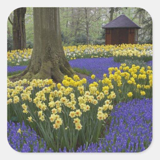 Narcisos, jacinto de uva, y jardín del tulipán, calcomania cuadradas personalizada
