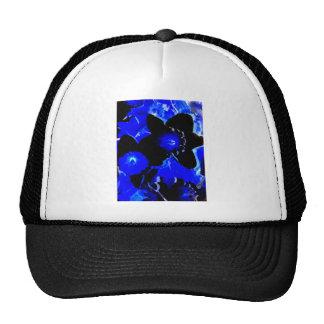 Narcisos negros y azules gorras