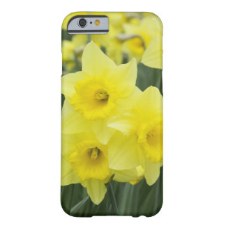 Narcisos RF) Funda De iPhone 6 Barely There