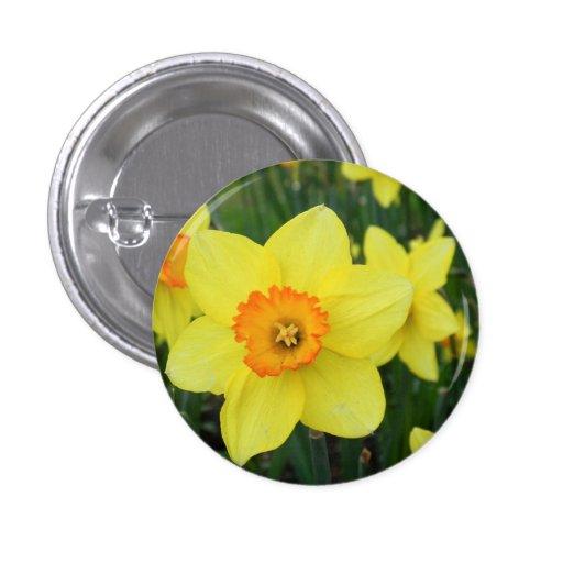 Narcisos trompones - Button