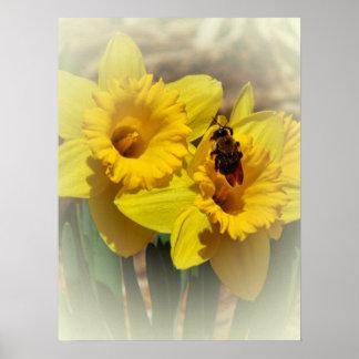 Narcisos y la abeja posters