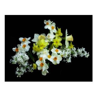 Narcisos y lilas postales