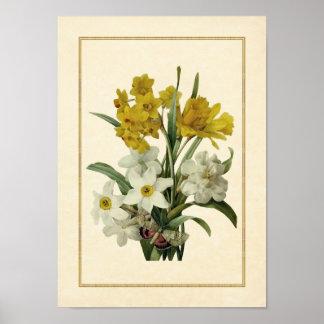 Narcisos y ramo y mariposa de la primavera de Narc Impresiones