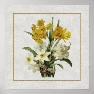 Narcisos y ramo y mariposa de la primavera de Narc Poster