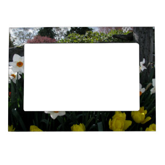 Narcissus and Wooden Fence Magnetic Picture Frame