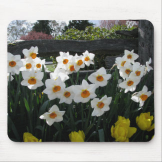 Narcissus and Wooden Fence Mouse Pad