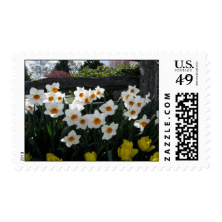 Narcissus and Wooden Fence Stamp