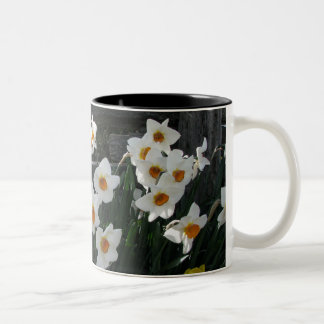 Narcissus and Wooden Fence Two-Tone Coffee Mug