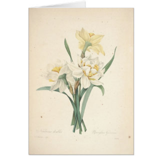 Narcissus by Redoute Botanical Sympathy Card