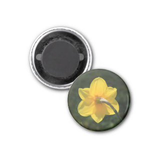 Narcissus by Thespringgarden Magnet