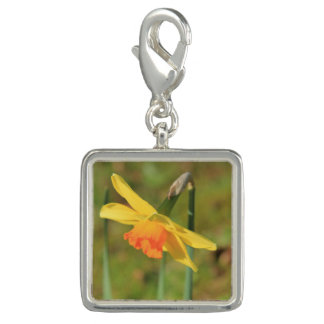 Narcissus by Thespringgarden Photo Charm