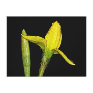 Narcissus Canvas Print