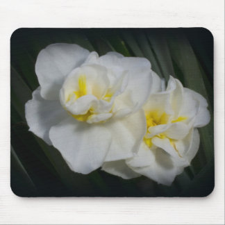 Narcissus Daffodil Mouse Pad