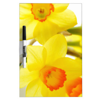 narcissus Dry-Erase whiteboards