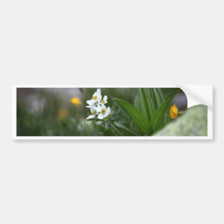 Narcissus-flowered anemone (Anemone narcissiflora) Bumper Sticker