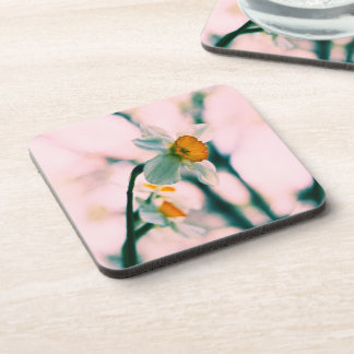 Narcissus Flowers - gentle white and yellow photog Beverage Coasters