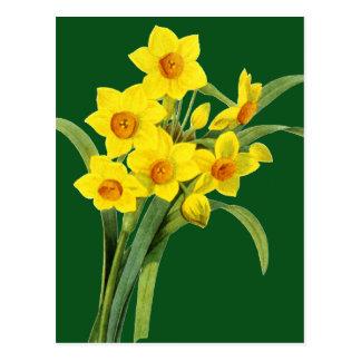 Narcissus (N Tazetta) Postcard