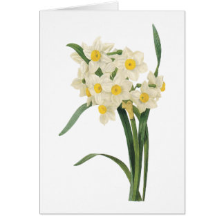 narcissus(Narcissus tazetta) by Redouté Card