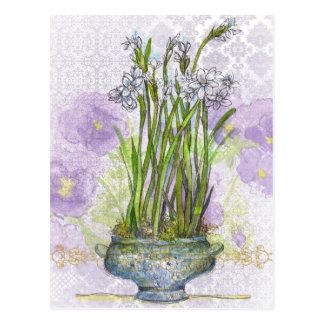 Narcissus Paperwhite Pansy Flower Collage Postcard